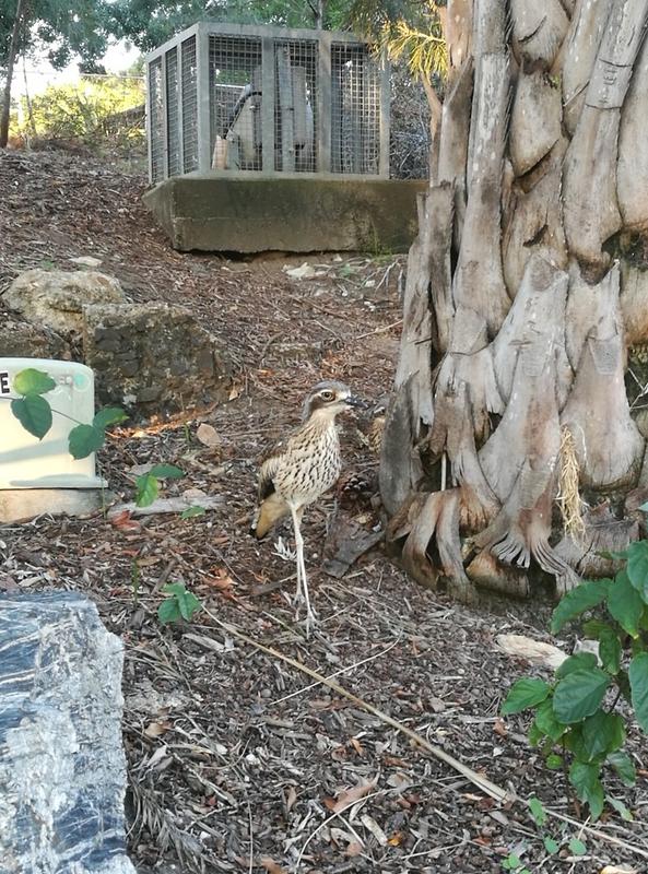 En fugl av typen ikke skummel